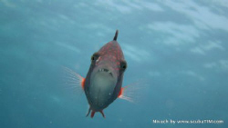 Wrasse - Natural light compact camera, no strobes, no fla... by Tim Ho 